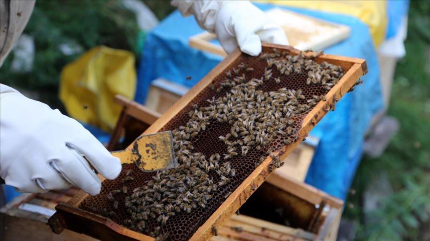 استيراد العسل من تركيا إلى السعودية