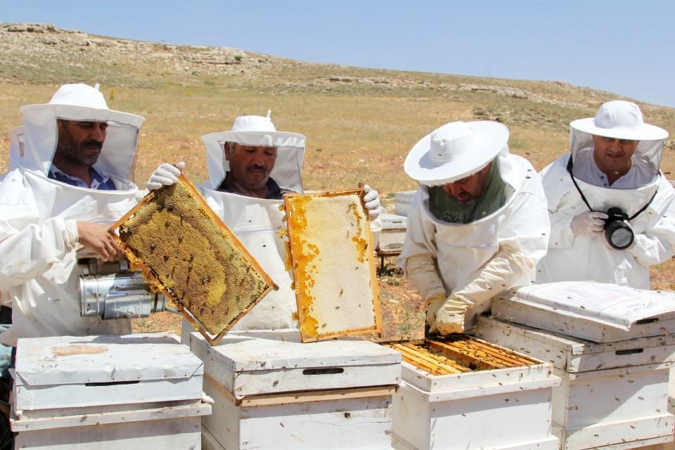 العسل التركي مغشوش