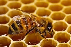 العسل الابيض في تركيا