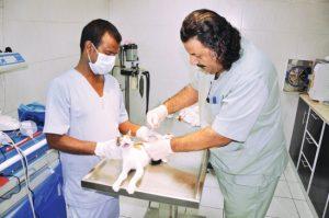 تجهيزات العيادات البيطرية