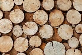 مصانع الأخشاب في الصين