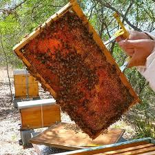 فوائد العسل للطحال