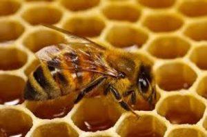 فوائد العسل لهرمون fsh