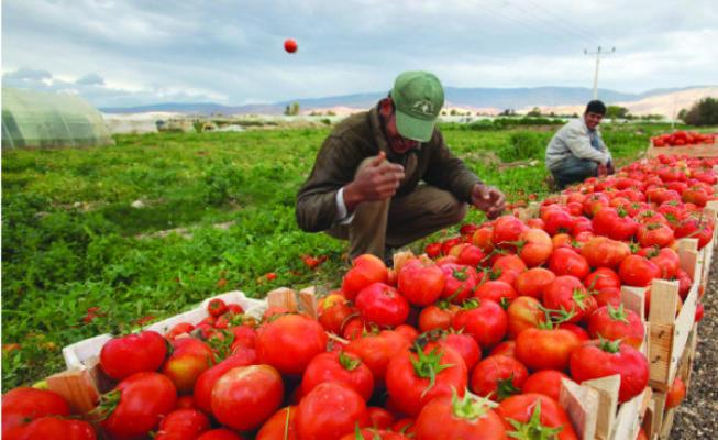 سوق الخضار والفواكه في تركيا