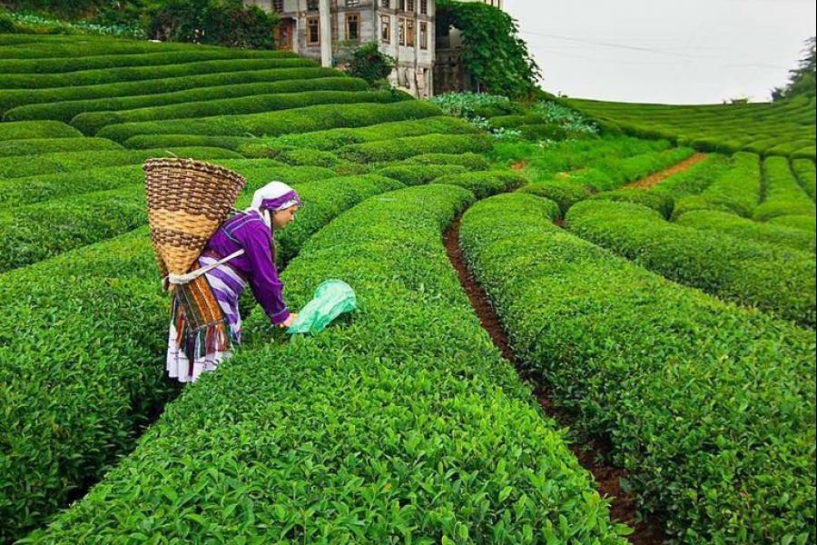 استيراد الشاي من تركيا