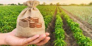 أفضل المشاريع الزراعية في تركيا