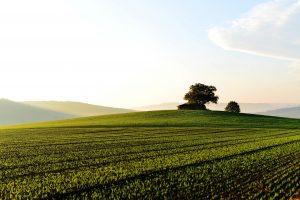 اراضي زراعية للبيع في يلوا تركيا