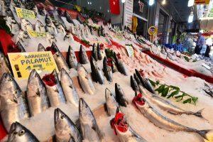 انواع السمك في تركيا