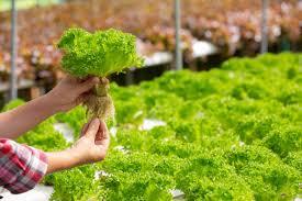 دراسة جدوى الاستثمار الزراعي