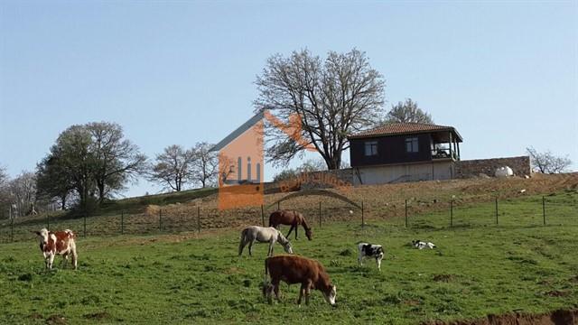 مشروع مزرعة ابقار في تركيا