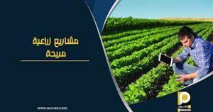 تكلفة مزرعة دواجن في تركيا