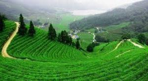 أفضل مشروع زراعي في تركيا