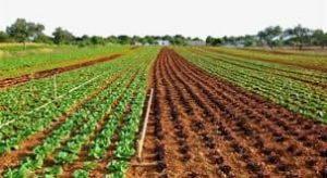 أهم المدن الزراعيةفي تركيا