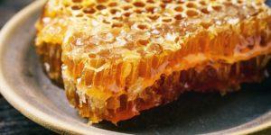 دراسة جدوي تربية النحل